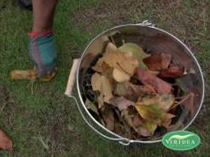 Composting, all you need to know