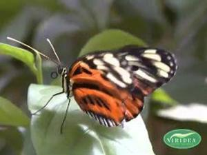 Choose plants to have a garden full of butterflies