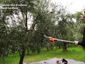 How to use Stihl equipment for the care of the olive