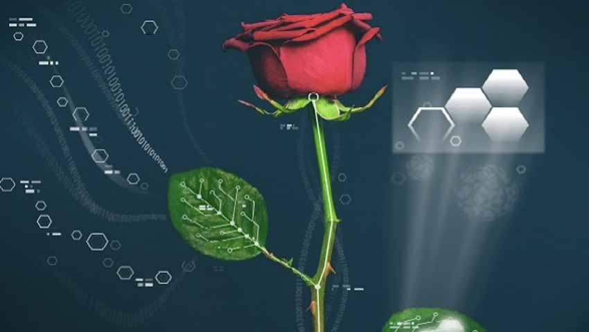 It is the first rose blossomed bionics