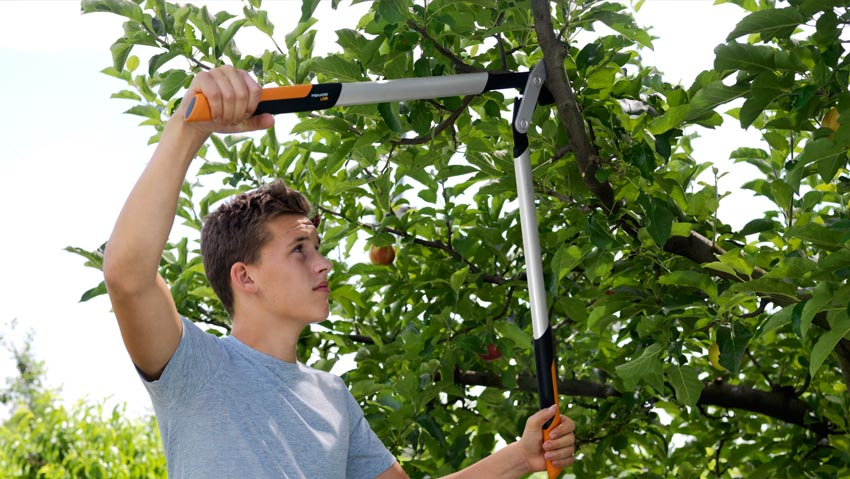 Pruning, power tripled with the new loppers