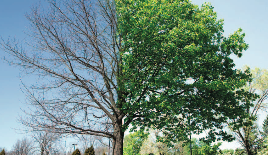 The tree growth and its diagnosis