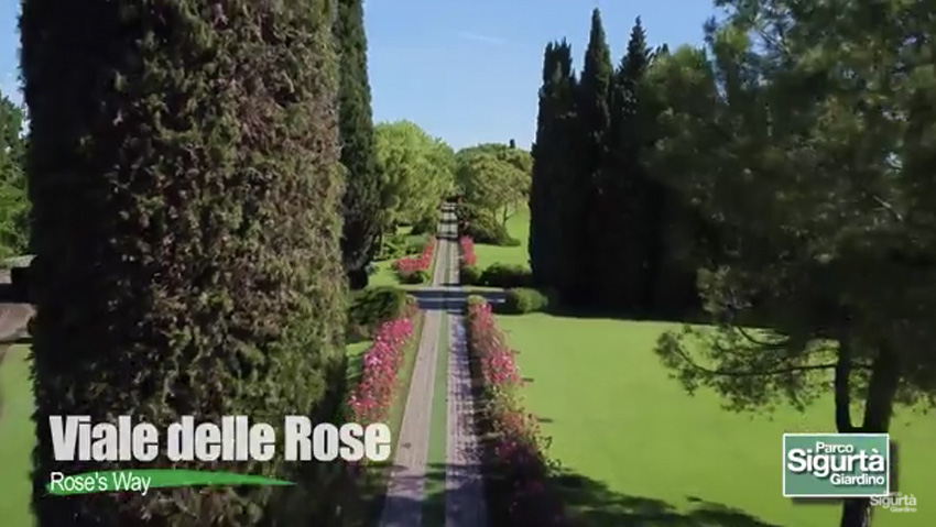 Vote the most beautiful flowering of Italy with a click
