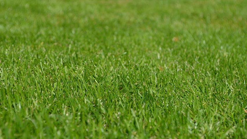 Fertilizer, the right products for a green lawn