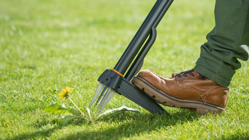 New grubbers for a garden without weeds and pesticides