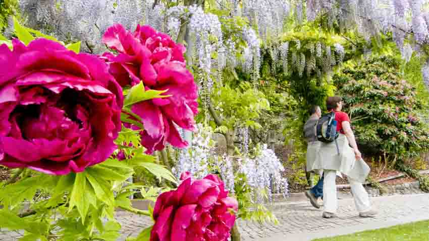 Free guided tours of the gardens of Trauttmansdorff