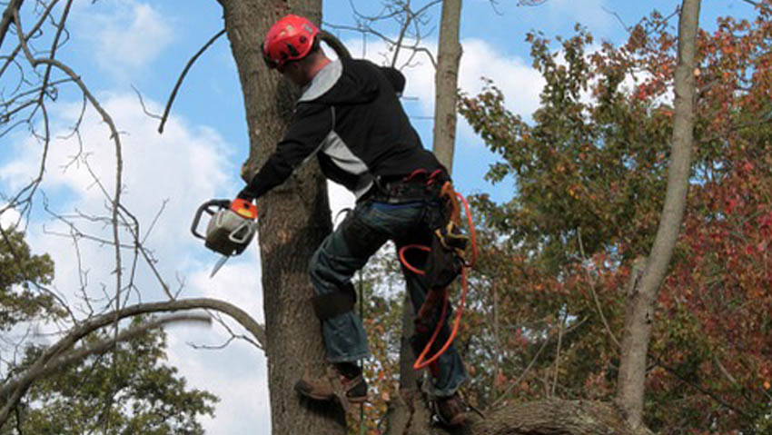 The courses to become certified arborist