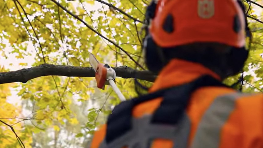 Advanced course of felling and management of the chain saw