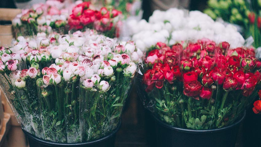 Plants and flowers, new trends to increase sales