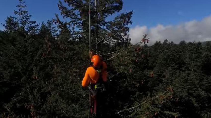 Vallombrosa: interview with tree climber