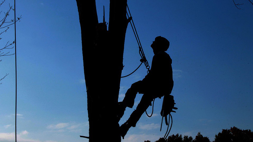 From chainsaw to tree-climbing: the next courses