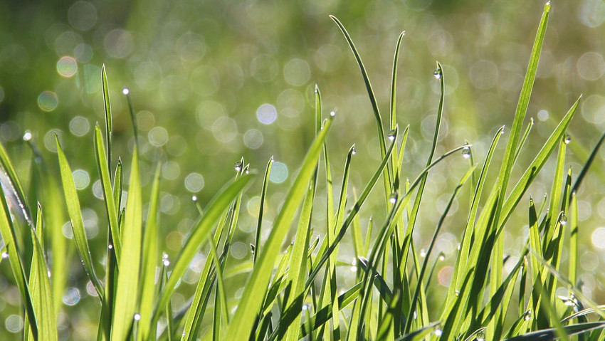 Lawn fertilizers: how to choose the right one