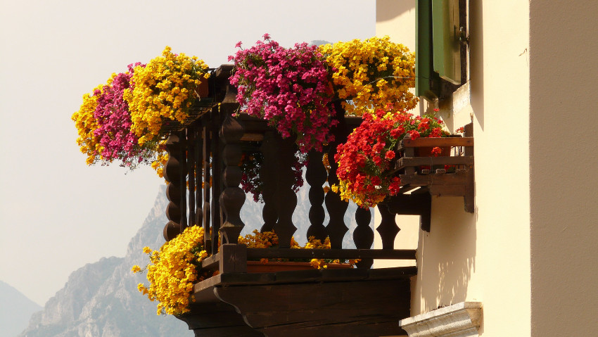 Balconies and flowered terraces, free courses