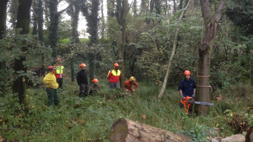 Correct use of the chain saw: the next courses