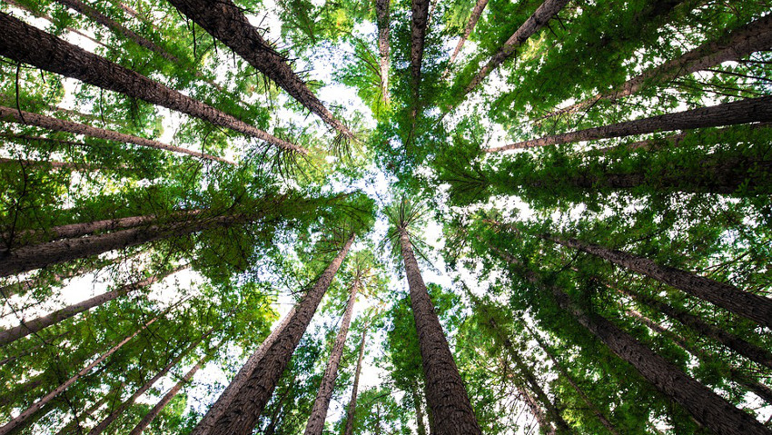 In the world there are 60,065 species of trees