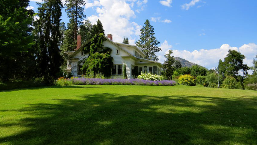 Seed of the lawn: how to choose the mixture