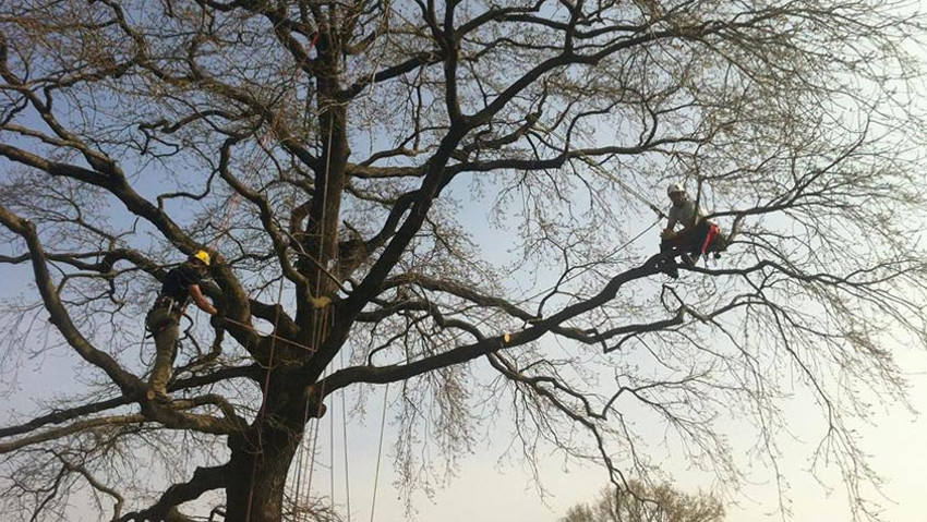Theoretical and practical course of tree climbing