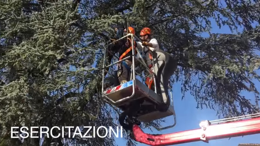 Pruning courses of ornamental trees