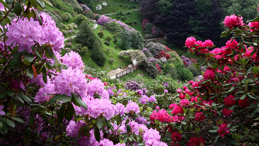 The most beautiful flowering in Italy is in Biella