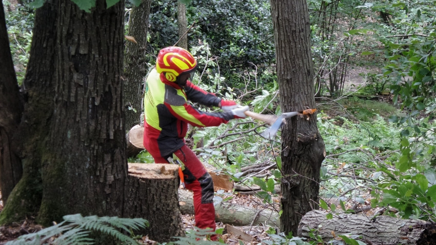 Forestry operators: new autumn courses