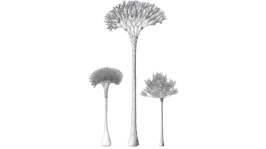 How did the first trees on Earth work?