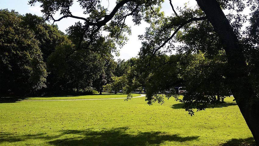 Trees and turf, coexistence strategies