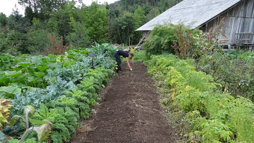 The organic cultivation of the vegetable garden