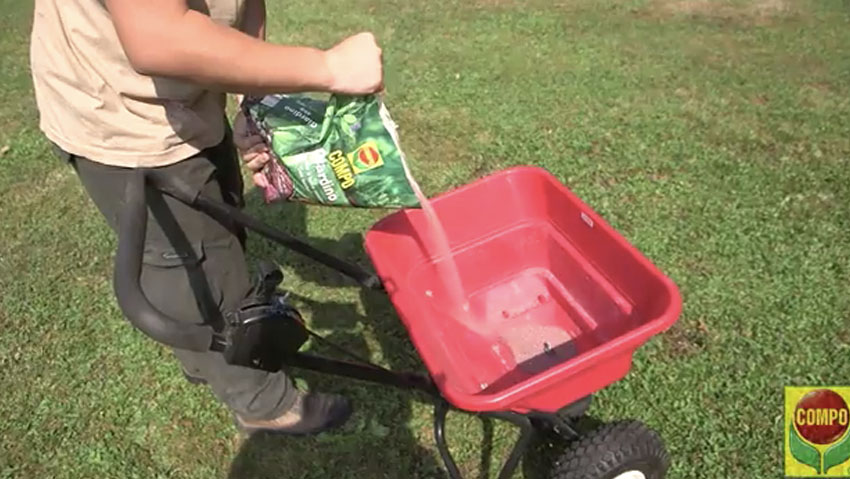 How to fertilize the turf
