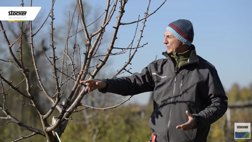 How to do training pruning