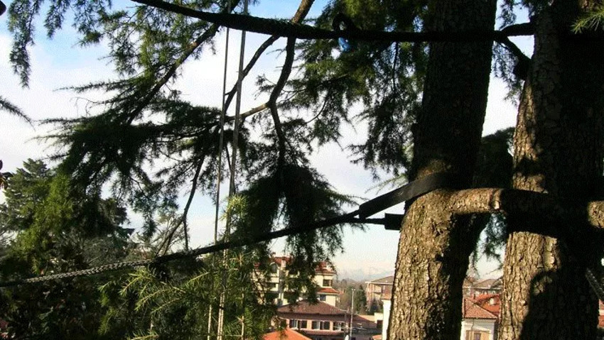 Complete course on tree consolidation