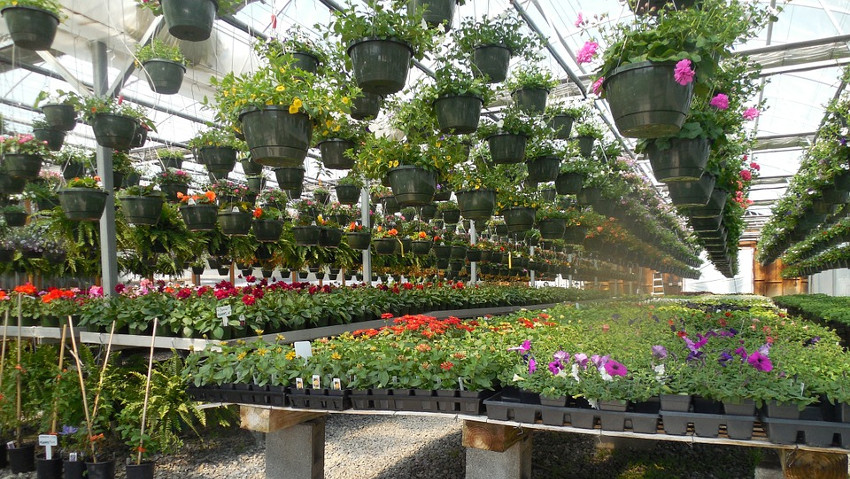 Floriculture, a 5 billion euro sector