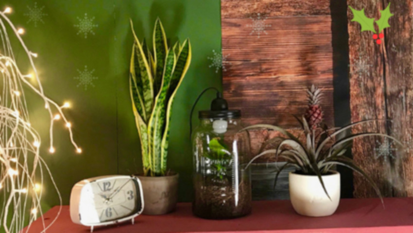 Potted plants for Christmas, with ecommerce