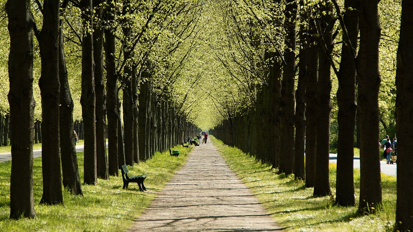 Italy, green on the rise. Here are the regions with more trees