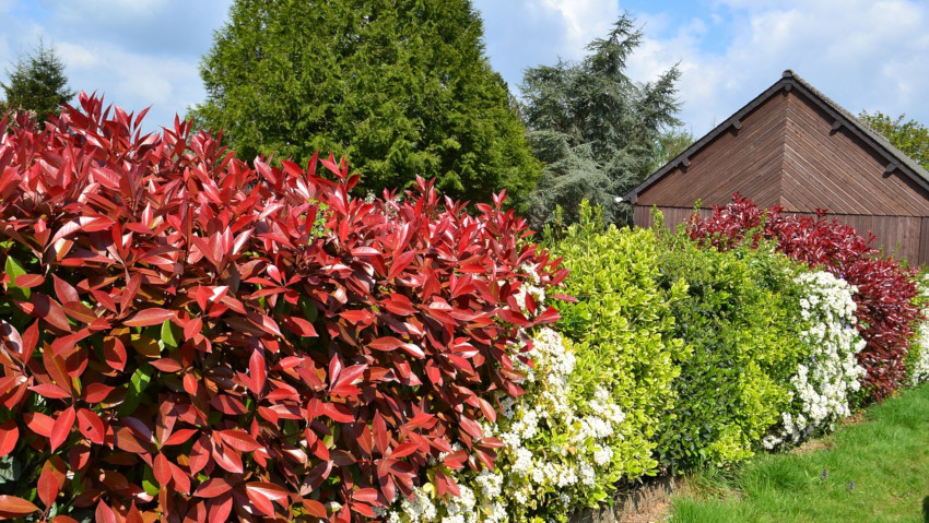 Advice on how to choose the right hedge