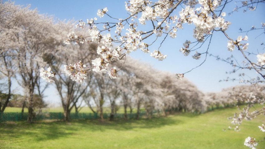 Temperatures above average: early blooms