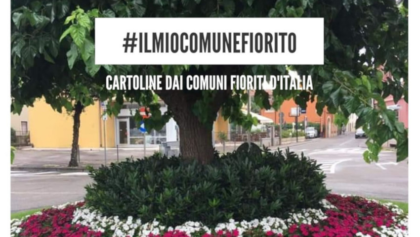 The photographic competition of the flowered municipalities