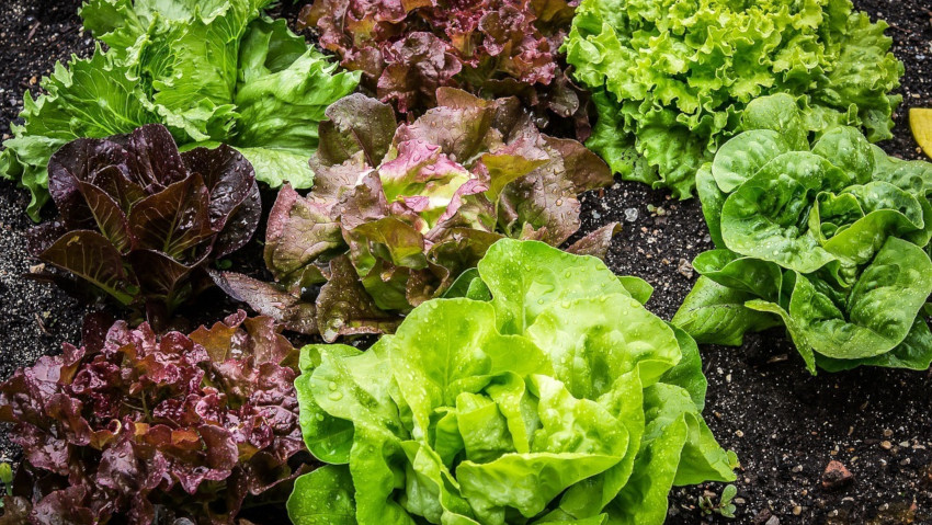 Tips for the vegetable garden in autumn and winter