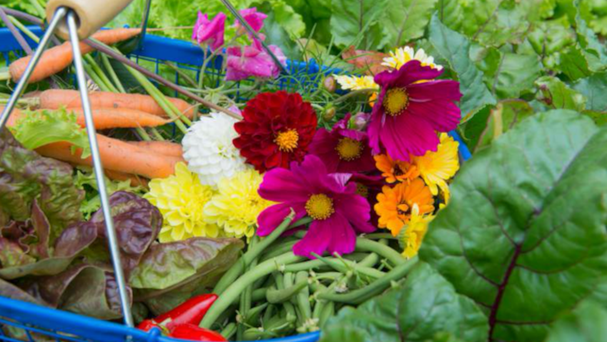 Vegetable oil for the natural defense of plants