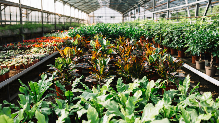 Covid19: problems and the future of garden centers