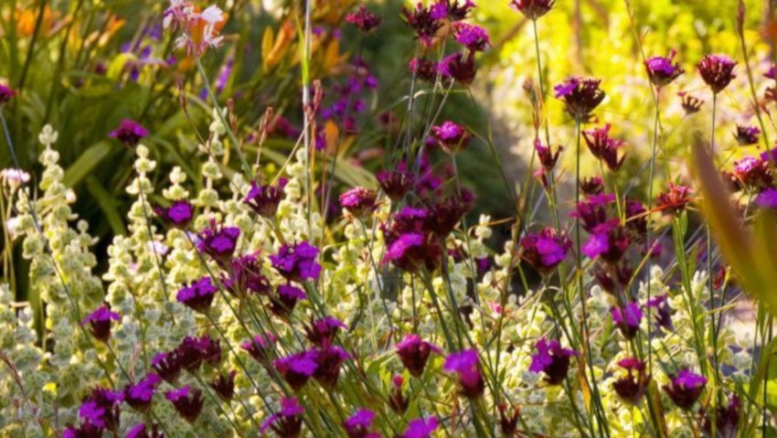 Creating and managing a Mediterranean garden: online course