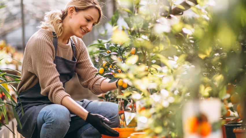 Online gardening: the best-selling products