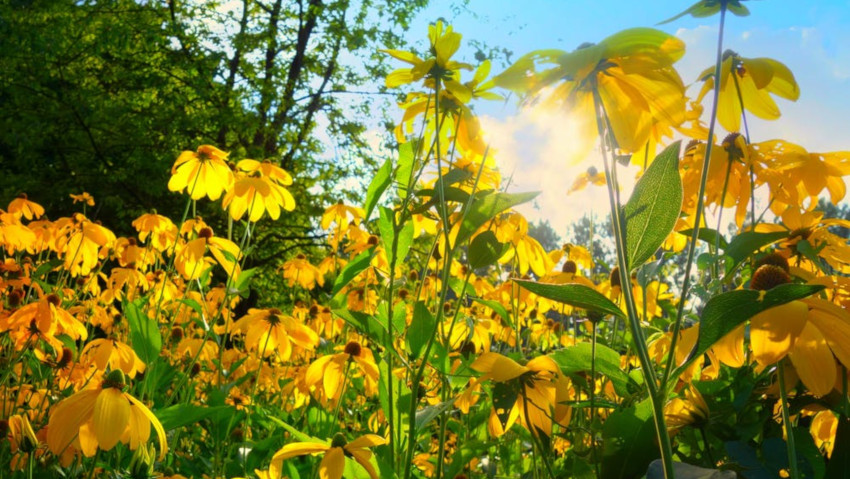 How to choose plants for flower beds, in the shade and in the sun