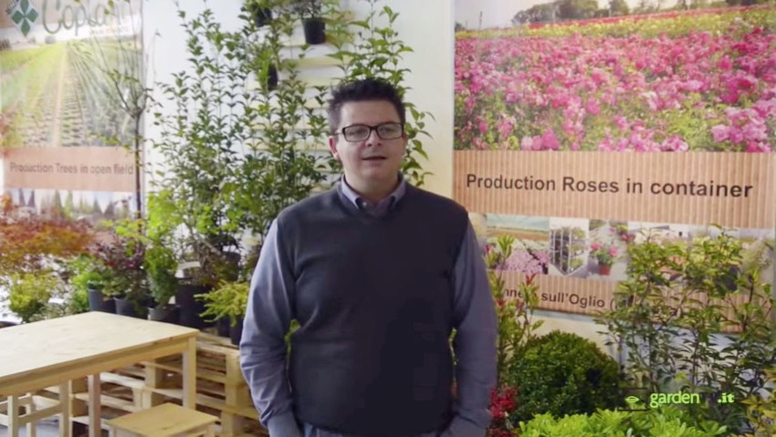 Vivaio Coplant: plants, shrubs and trees made in Italy