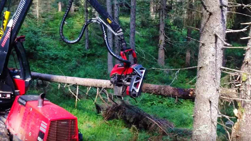 The machine that cuts the trees