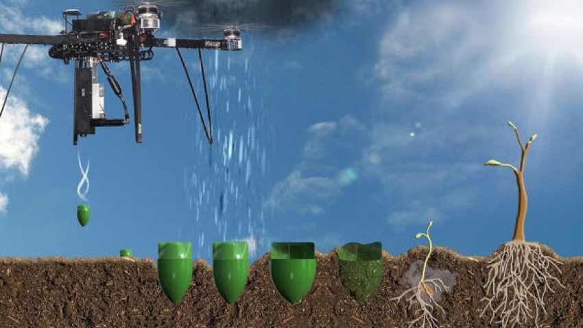 Reforestation with drones: the trees from heaven