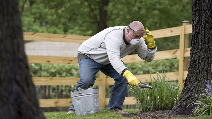 Plant protection, license for vegetable and flower gardens